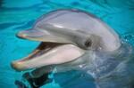 Chien ou dauphin