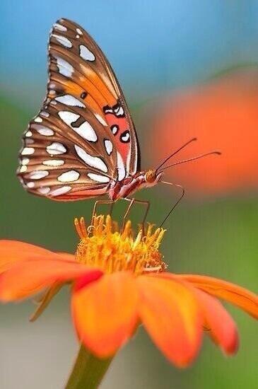 Le papillon sur la main