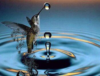 Le monde fascinant des oiseaux-mouches