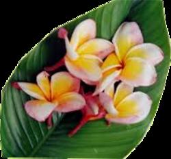 Les fleurs des îles Marquises
