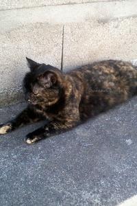 Mon chat Boubou se repose à l'ombre