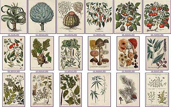[Cours théorique] Les plantes médicinales 4ème, 5ème, 6ème et 7ème année -jYvVHaHZXPVrnGR9L6tNfcKozs