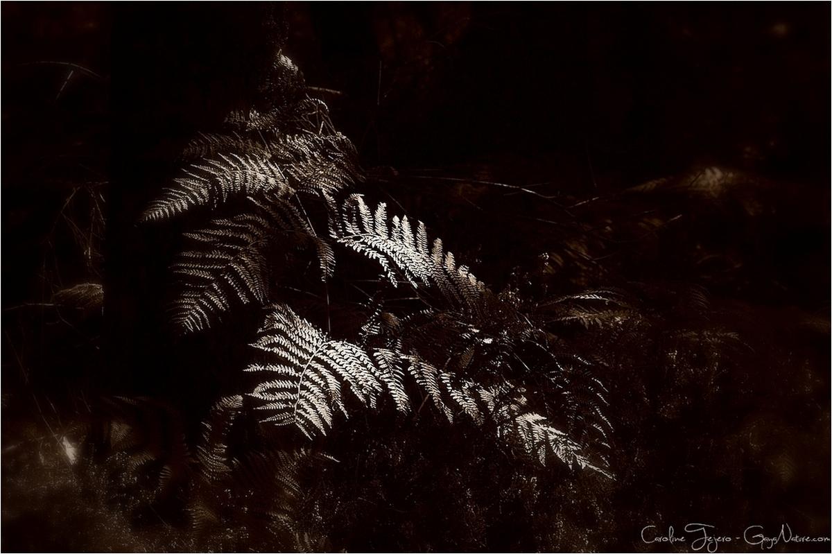Fougères en sous-bois