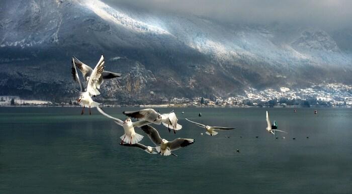Bonjour.... le Lac d'Annecy....