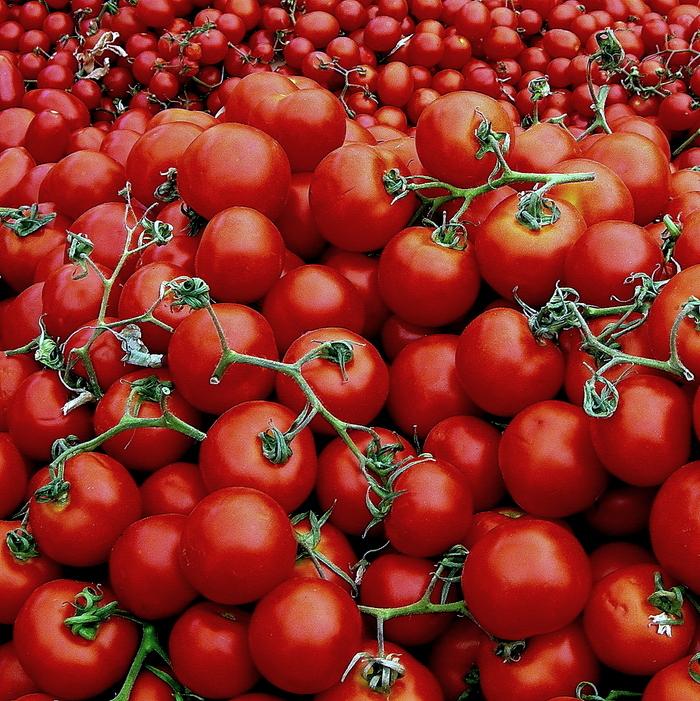 Solanum lycopersicum.