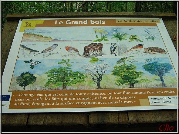 SENTIER DES JACINTHES PANNEAU GRAND BOIS