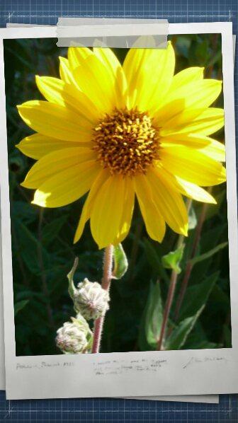 Declinaison en jaune avec les images de mimipalitaf