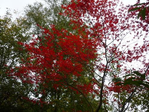 Au Coeur de l'automne à Gembloux