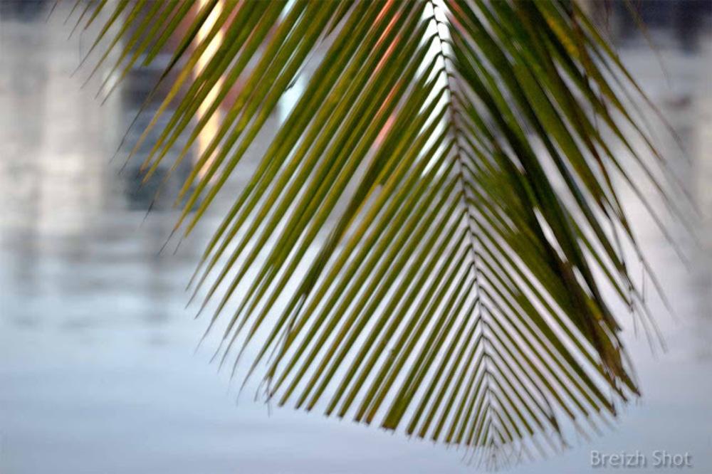 Contrejour feuille de palmier