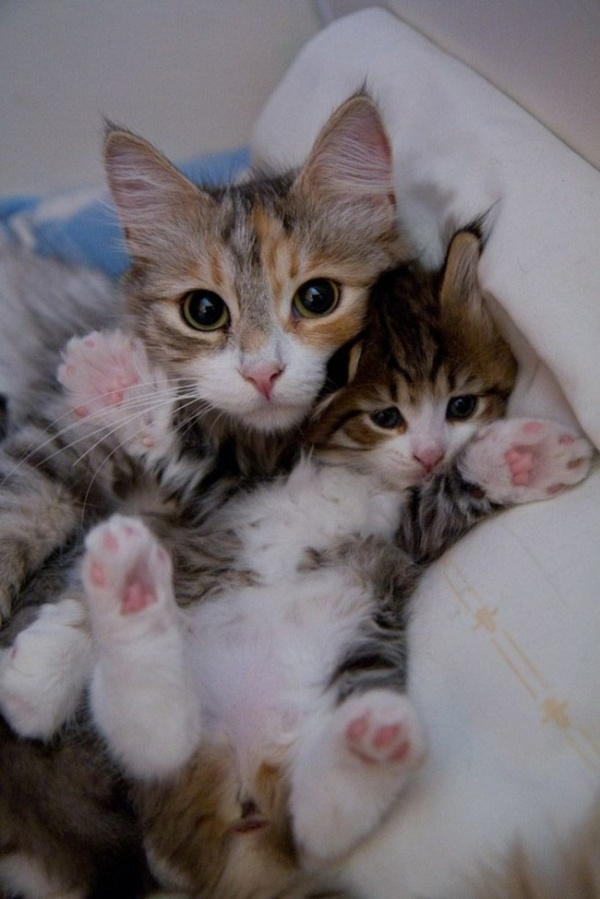 Adorables chats et chatons