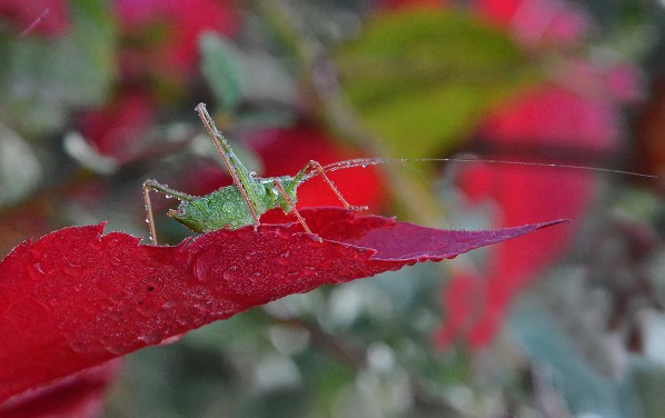Insectes-papillons-5-3081a.jpg