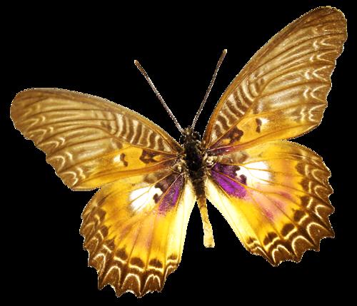 Papillons Série 4