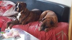 pendant que d'autres bossent, nous on squatte le canapé!