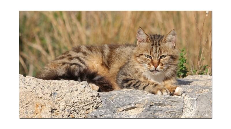 Les chats sauvages de Port-Vendres (Pyrénées-Orientales)