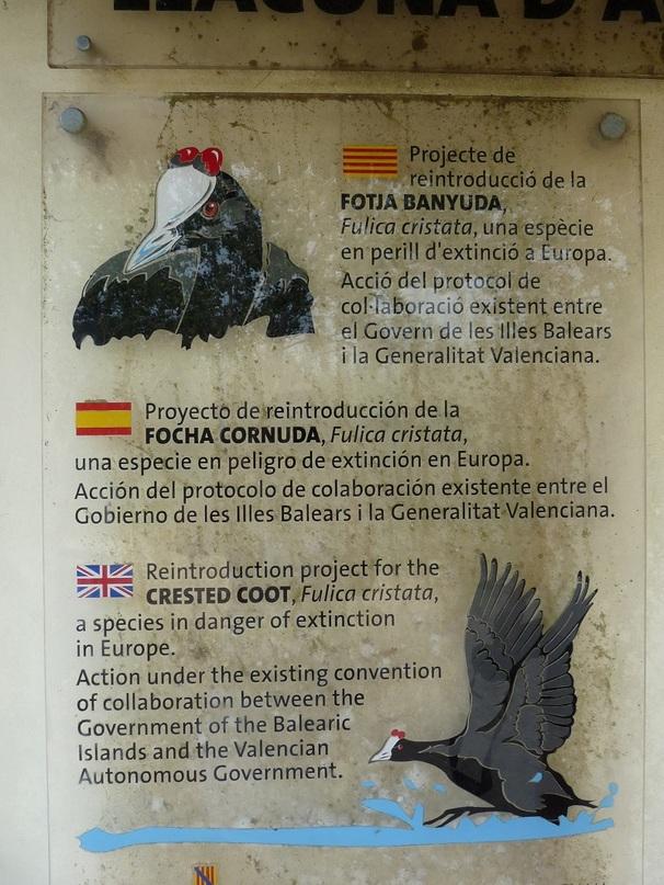 Oiseaux en Espagne