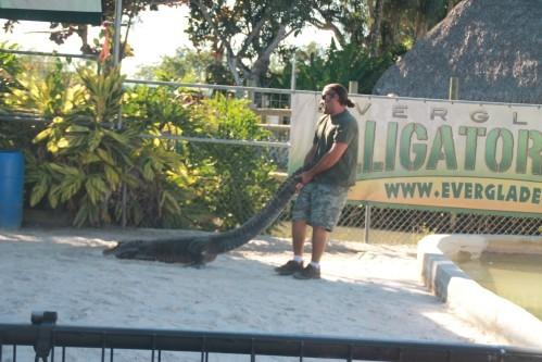 Everglades 2381