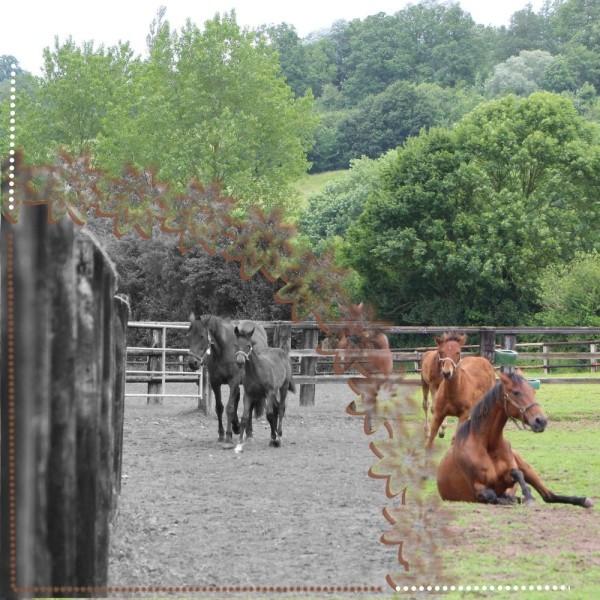 chevaux 09