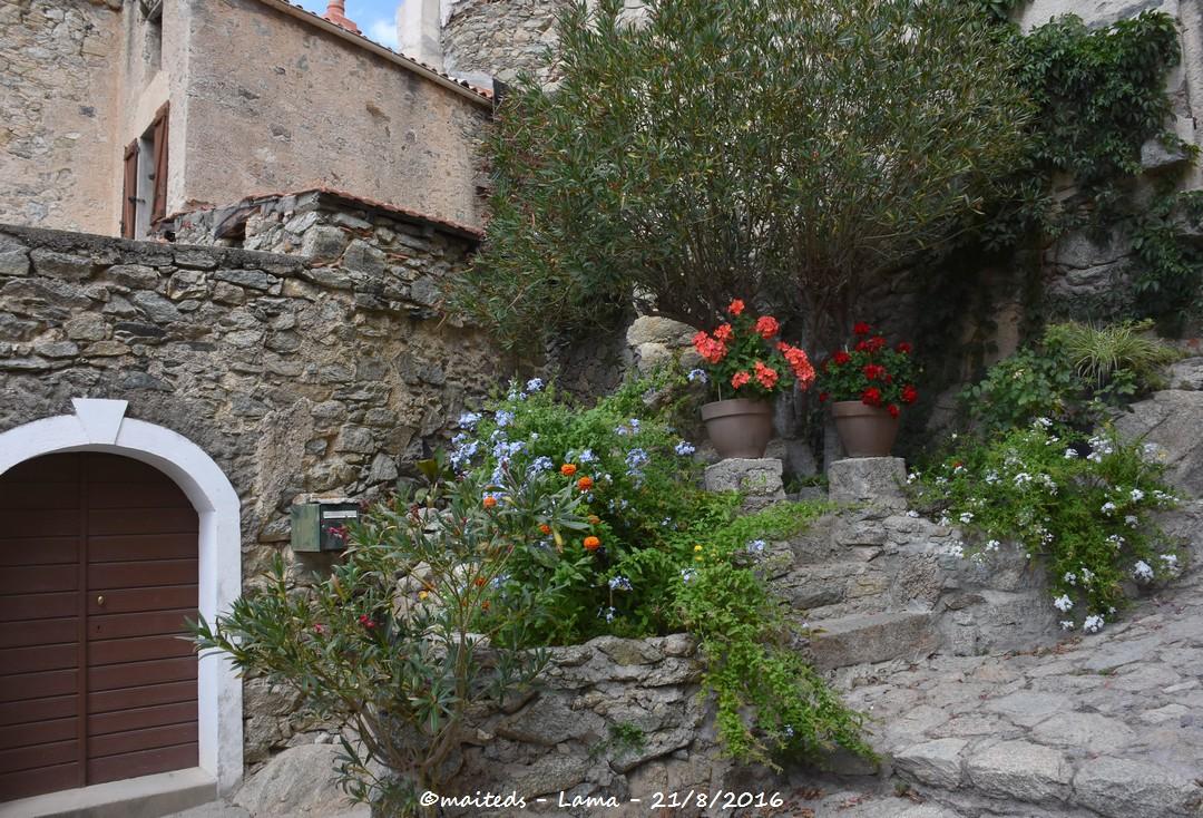 Lama - Corse