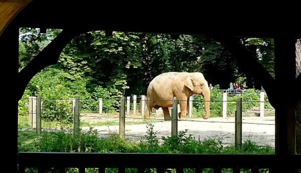 zoo20.06.12-120.JPG