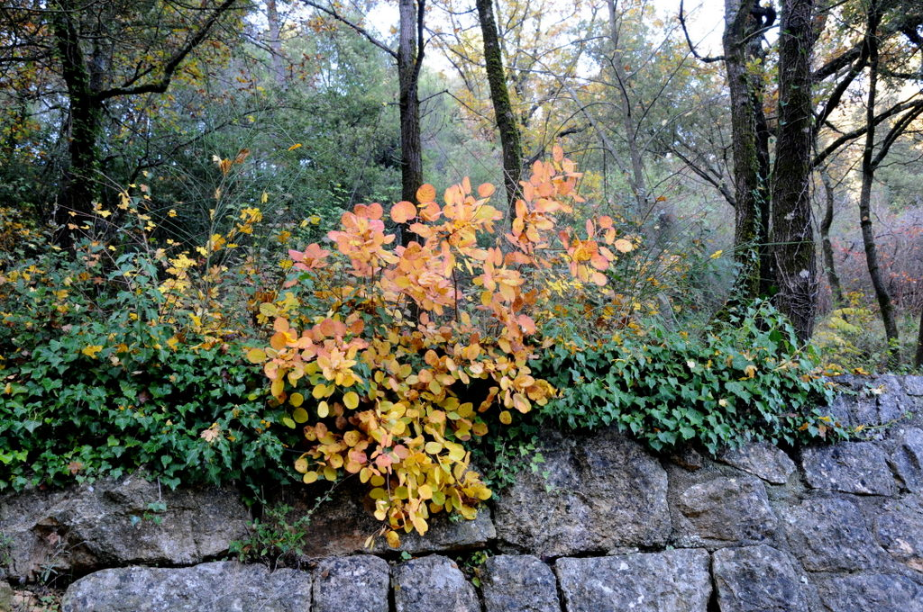Quelques feuillus d'automne...