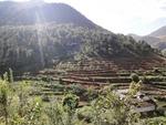 Le Yunnan, un parfum de Grenoble