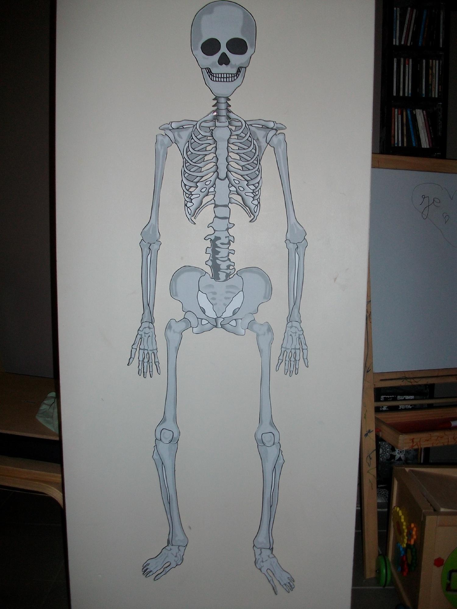 Populaire Les os du squelette : Construire un squelette d'1m de haut  GM55