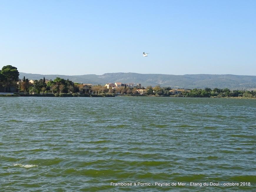 Peyriac de mer - Etang du Doul - Aude 2018