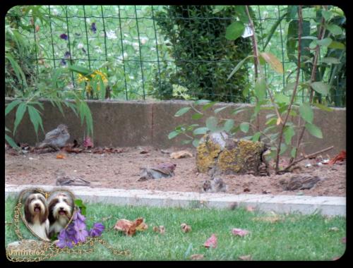 les z'ozieaux du jardin ♥ d' Athos & Cheyenne♥