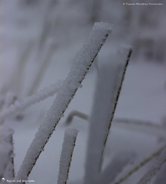Froid, neige et vent...