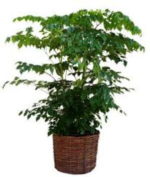 plantes mieux arrosées