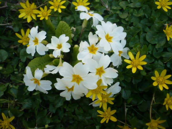 fleurs souvenir d'un printemps au pavillon...