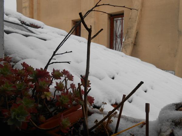 neige ou neige pas ?