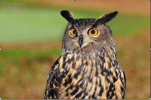 Rêve de Sologne petites infos oiseaux