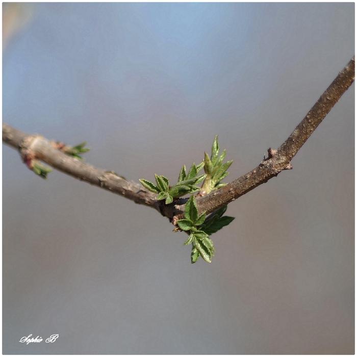 Le printemps nous fait des petits signes ...