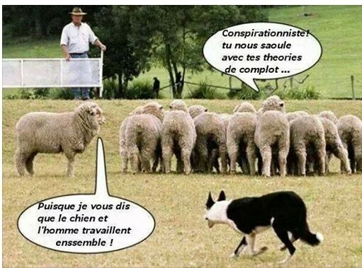 conspirationnistes-ou-moutons.jpg