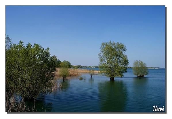 Lac du Der 043
