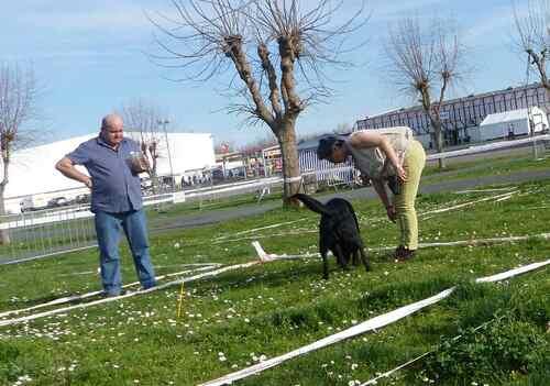 Démonstration à l'exposition canine de Périgueux