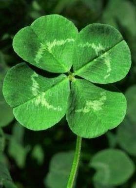 Irish Symbols and Their Meanings | Clover leaf, Irish symbols ...