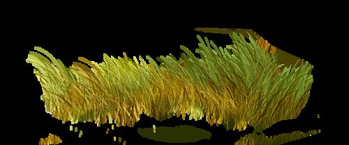 Verdure - Plantes Vertes