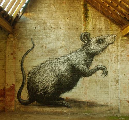 Roa, artiste urbain, par Orlane Hoareau