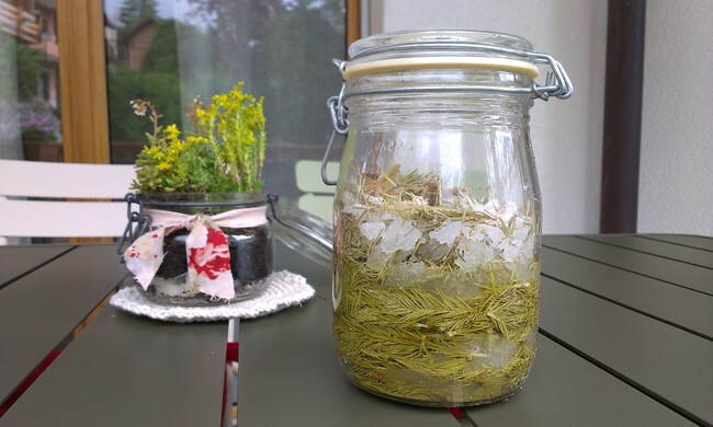 Recette du sirop de bourgeons de sapin