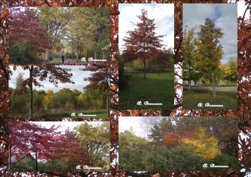 Un dimanche après midi d'automne, en Forêt !