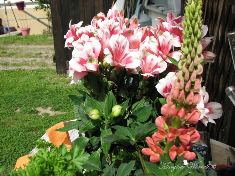 Ingersheim : Jour de jardinage