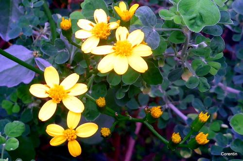 De belles fleurs jaunes !
