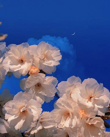 Les fleurs de Sophia ...