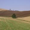 Couleur estivales de Toscane