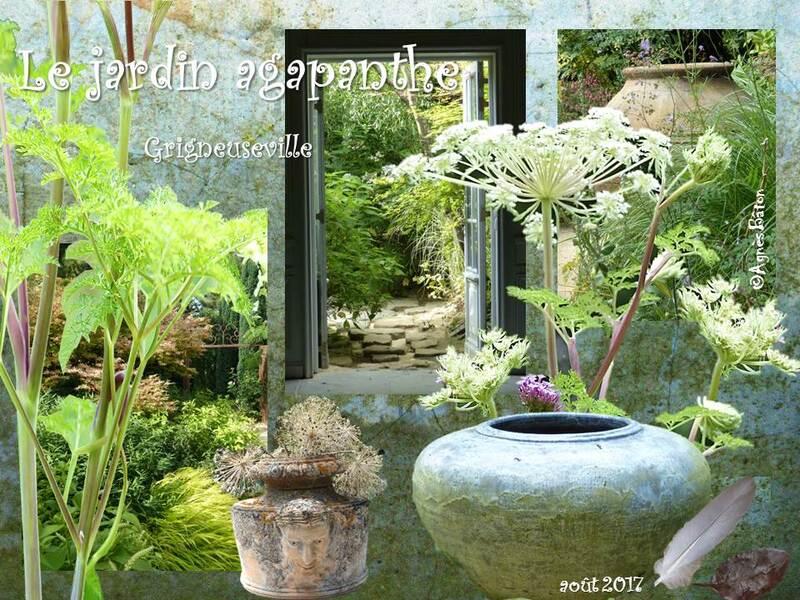 Le jardin agapanthe