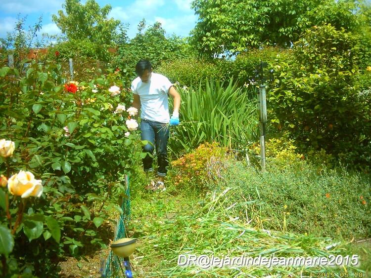 2015 le jardin de Jean Marie,ma roseraie ,les premières roses,les travaux,le jardinier,
