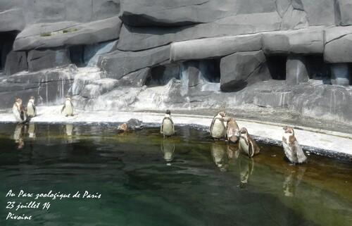 LES PINGOUINS DU PARS ANIMALIER DE PARIS ONT CHAUD !