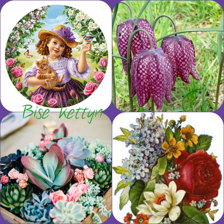 la violette.♥